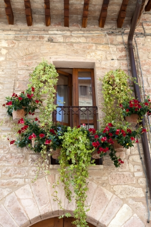 flowers hangs on the window of a home Stock Photo - 15151645