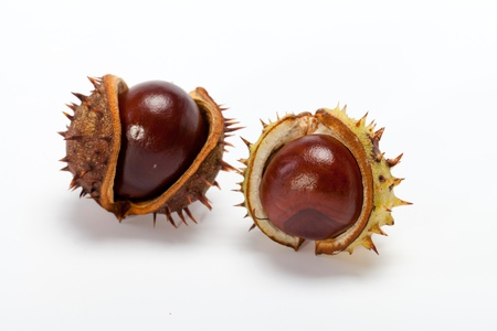 buckeye seed: ripe chestnuts isolated on a white background
