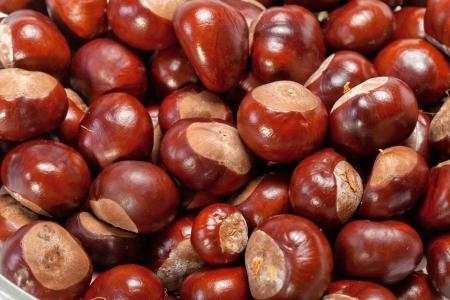 buckeye seed: ripe chestnuts  Stock Photo