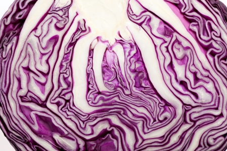 Red Cabbage cross section on White Background  Zdjęcie Seryjne