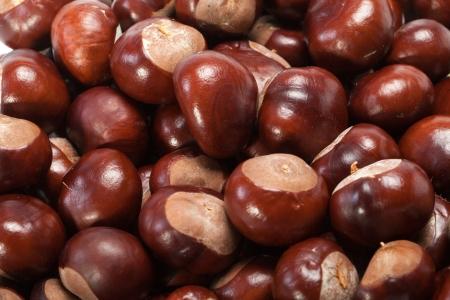 ripe chestnuts  版權商用圖片