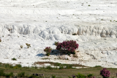 Travertine pools and terraces in Pamukkale Turkey  Stock Photo - 16813365