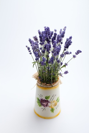 Watering Can, Jug and Lavender isolated on white photo