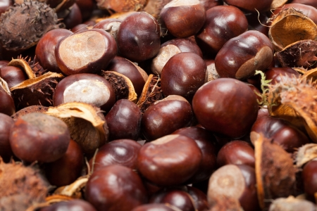 ripe chestnuts  photo