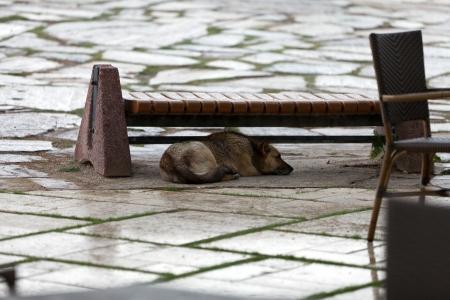 vagabond: dog hiding before the rain