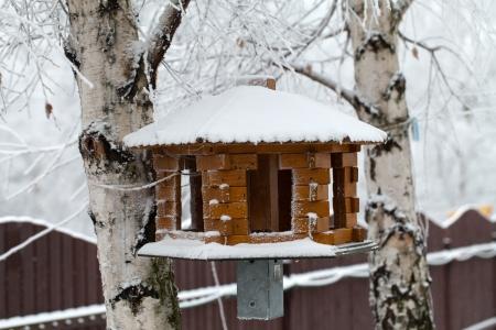 trough: the feeding trough for birds