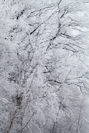 hoar: Winter landscape Stock Photo