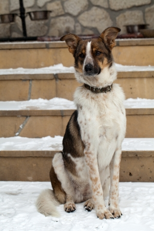the homeless mutt clasped from the animal shelter Stock Photo - 17043156