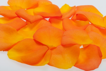 Petals of the orange-rose isolated on the white background photo