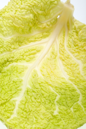 fresh savoy cabbage leaf as a texture  photo