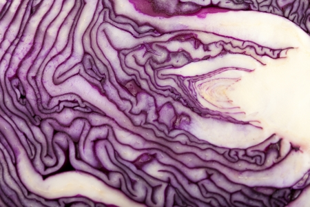 Red Cabbage cross section on White Background  Banque d'images
