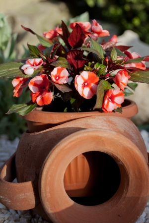 begonia: begonia flor
