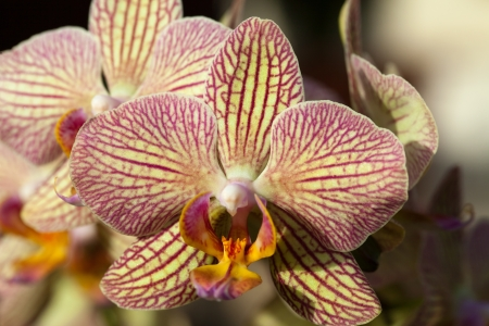 freaky: Freaky orchid pink and yellow  Stock Photo