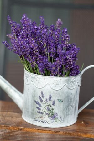 Watering Can and Lavender photo