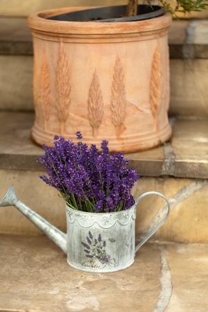 Watering Can and Lavende photo