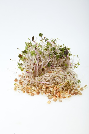 The healthy diet. Fresh sprouts isolated on white background  photo