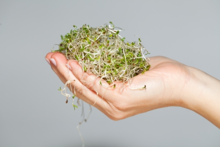 forefront: The healthy diet. Fresh sprouts isolated Stock Photo