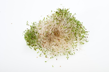 forefront: The healthy diet. Fresh sprouts isolated on white background