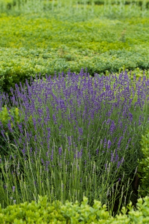 herbs de provence: Splendid, decorative gardens at castles in the Valley of Loire