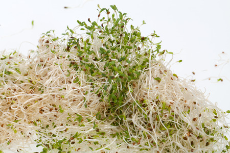 The healthy diet  Fresh sprouts isolated on white background  photo