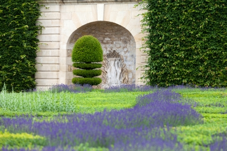 herbs de provence: Gardens with the flourishing lavender at castles in the valley of Loire