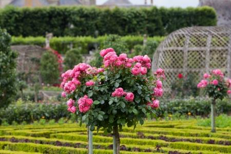 Kitchen garden in Chateau de Villandry. Loire Valley, France