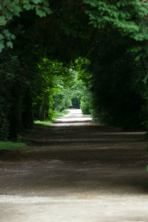 swain: An avenue of trees in the grounds of the chateau of Chenonceau in France.