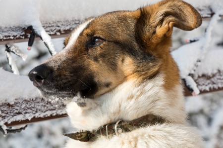 mutt: the homeless mutt clasped from the animal shelter