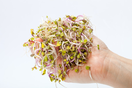 Fresh alfalfa sprouts isolated on white background  photo