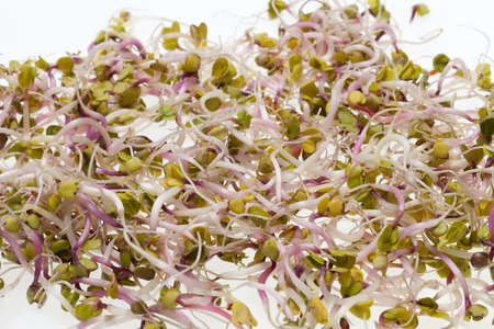 The healthy diet. Fresh sprouts isolated on white  photo