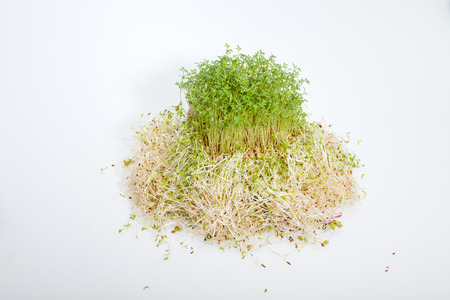 Fresh alfalfa sprouts and cress on white  Stock Photo