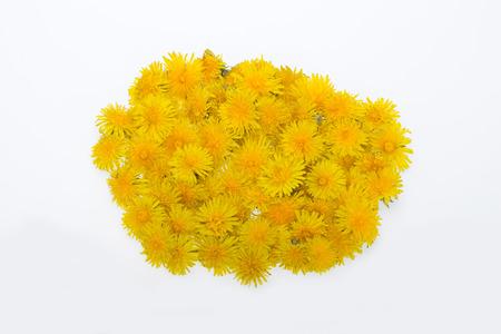 beautiful yellow flower of Dandelion photo