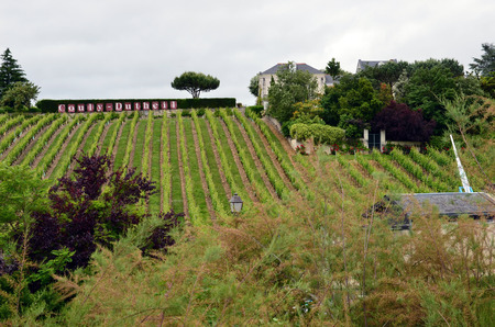 Vineyard in the famous wine making region - Loire Valley , France Stock Photo - 28102456