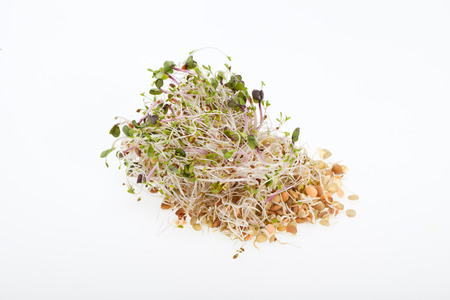 The healthy diet. Fresh sprouts isolated  photo