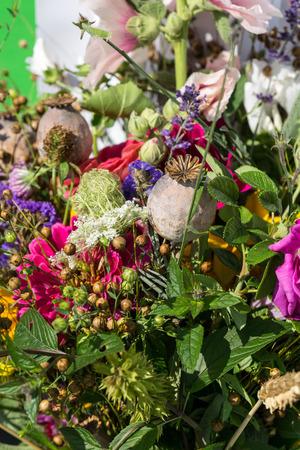 bigleaf hydrangea: beautiful bouquets of flowers and herbs