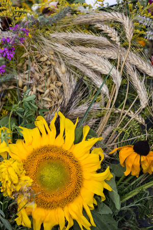 sorb: beautiful bouquets of flowers and herbs