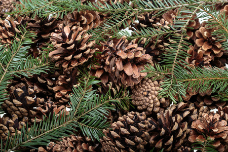 Background  of dried natural pine cones. Conceptual of the Christmas season Stock Photo