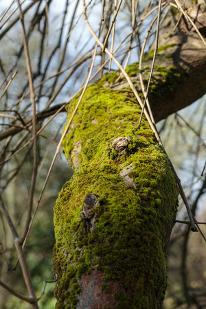 the tree trunk covered with the moss photo