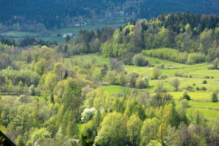 copse: Idyllic rural view of gently rolling patchwork farmland