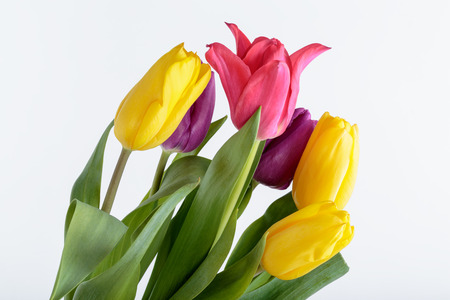 flower bouquet: Flower bouquet from colorful tulips