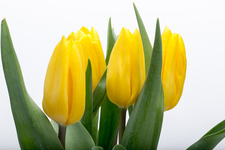 flower bouquet: Flower bouquet from yellow tulips