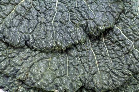 savoy: fresh savoy cabbage leaf as a texture