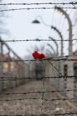 elektrischer Zaun: Elektrozaun in ehemaligen Nazi-Konzentrationslager Auschwitz I Polen