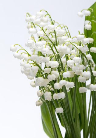 flor de lis: Lirio de los valles (Convallaria Majalis) aislado en blanco Foto de archivo