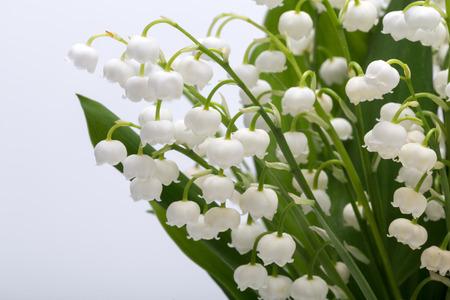 릴리 밸리의 (Convallaria Majalis) 화이트 절연 스톡 콘텐츠 - 42707410