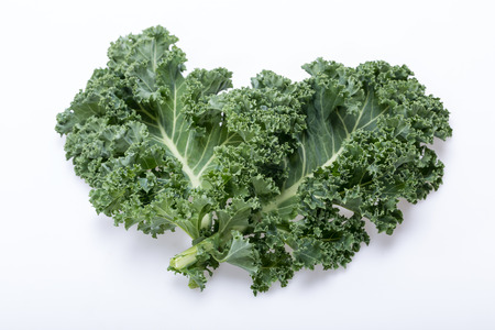 A healthy fresh curly kale 스톡 콘텐츠