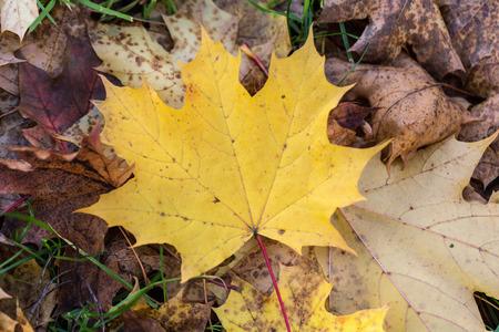 landschap: Mooie herfst bos landschap met kleurrijke bladeren Stockfoto