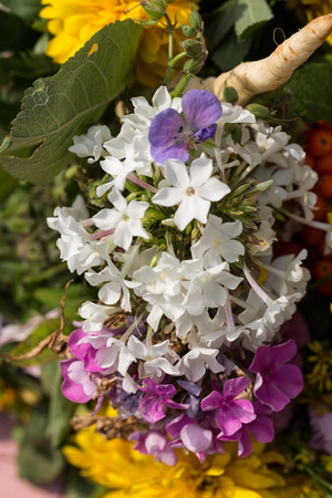 bigleaf hydrangea: handmade  beautiful bouquets from flowers and herbs