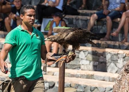 canary island: LA LAJITA, FUERTEVENTURA, SPAIN - SEPTEMBER 11, 2015:  Bird of Prey Show, Oasis Park, Fuerteventura, Canary Island, Spain