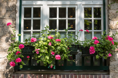 Window decorated with Geranium flowers in Montmartre Stock Photo